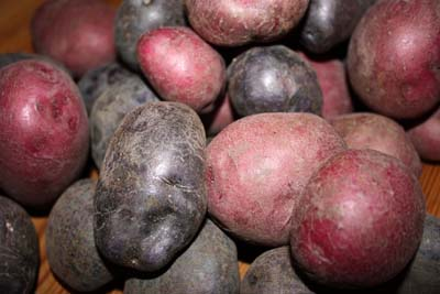 Elkhead Ranch spends the summer growing potatoes in North Routt so you can enjoy them all winter long.